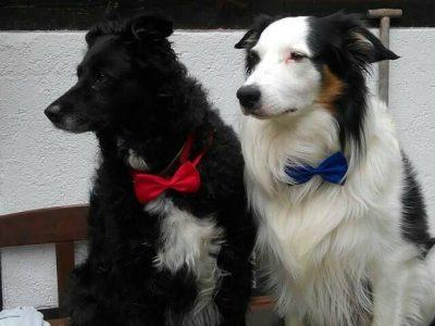 Jessi & Buddy